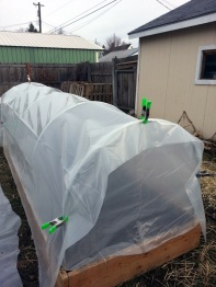 Hoop House Covered 03-05-2014
